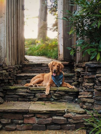 Portrait of dog sitting on stone wall