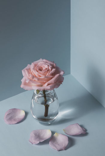 Close-up of rose in glass vase on table