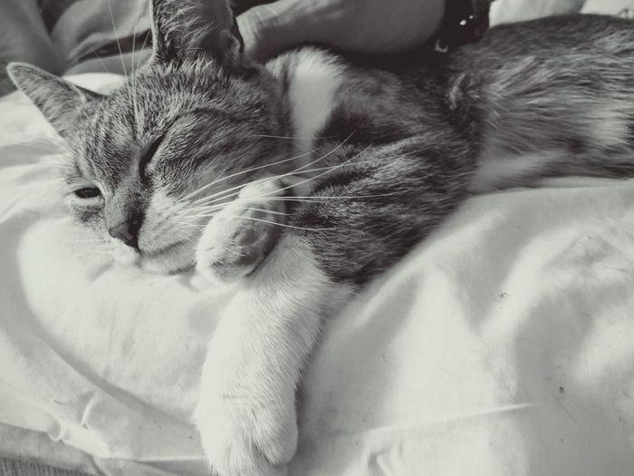 Sygin Nexus5x Weekend Cat♡ Weed Life Black & White Nexus5photography Same