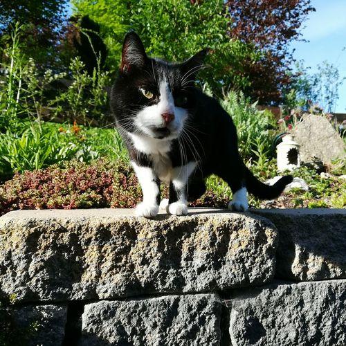 Housecat Cat Cat Lovers BYOPaper!