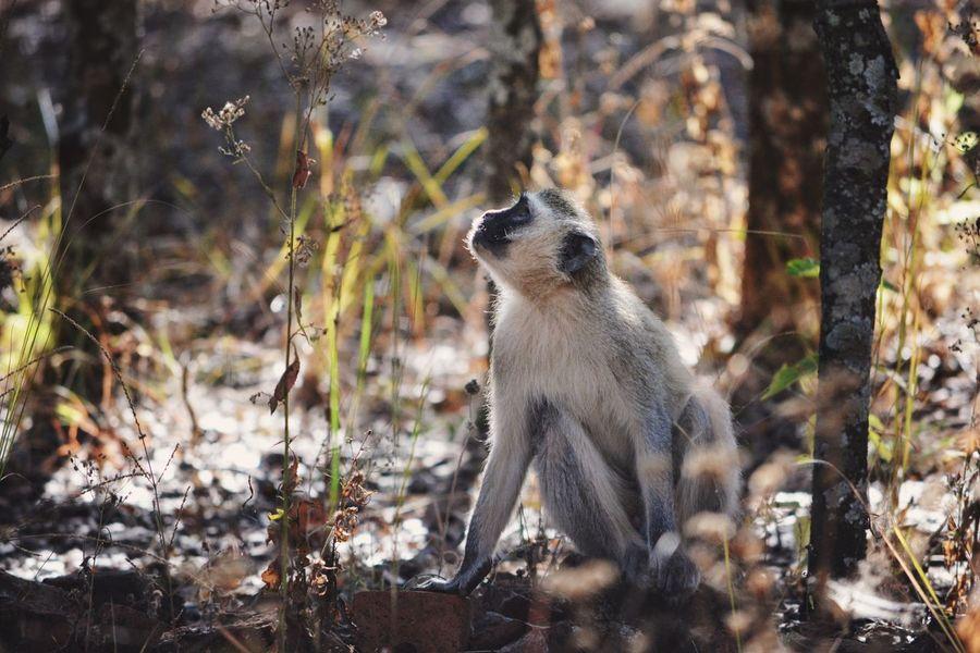 Praying. One Animal Animal Wildlife Nature Outdoors Day No People Nature Mammal Africa Wildlife Green Monkey