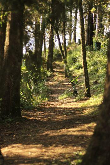 Forest Cerrodelborrego Canont3 Bosque Trees Camino Vereda Road