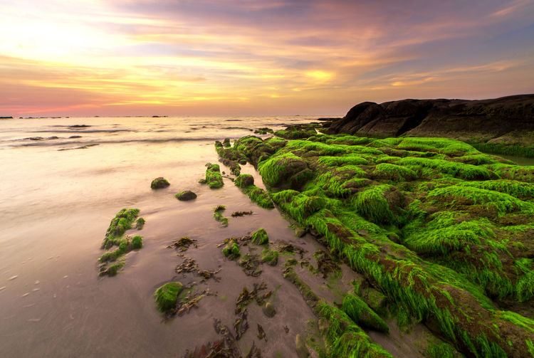 Nature Background_sunset Sky Sea Sunset Land Water Scenics - Nature Cloud - Sky Beach Beauty In Nature Tranquility Tranquil Scene Horizon Nature No People Horizon Over Water Sand Idyllic Green Color Plant Outdoors