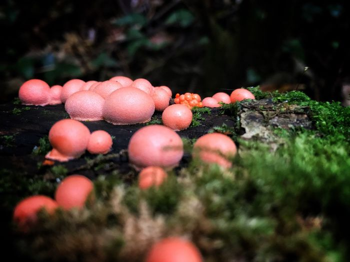 Mushroom Growing Outdoors Fungus Nature Growth Selective Focus Toadstool No People Close-up Food And Drink Beauty In Nature Day Food Fly Agaric Tree Freshness Fly Agaric Mushroom