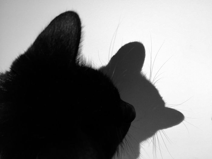 Cat Inner Power This Is Family Visual Creativity HUAWEI Photo Award: After Dark #NotYourCliche Love Letter