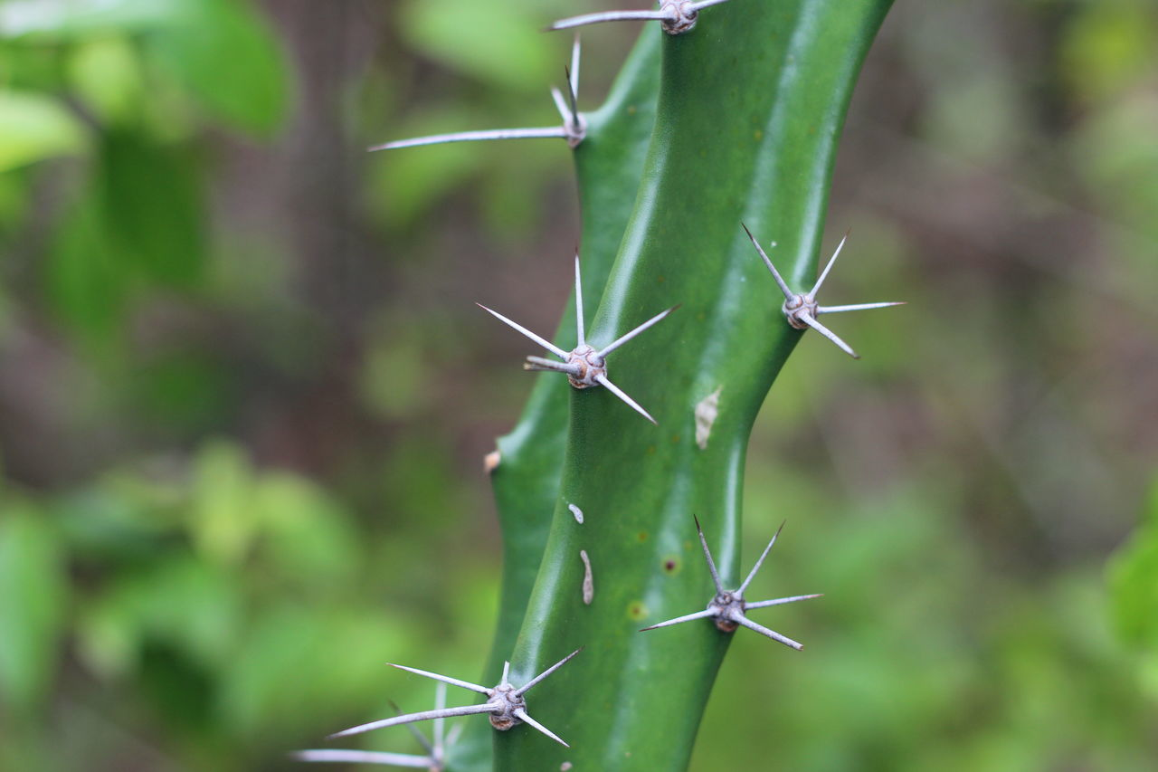 green color, focus on foreground, growth, beauty in nature, no people, nature, plant, thorn, day, sharp, spiked, close-up, plant part, leaf, outdoors, succulent plant, sign, security, cactus, protection, spiky