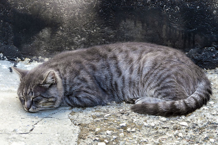 View of a sleeping cat
