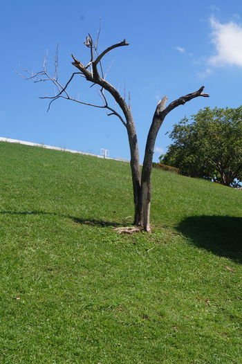 Tree Grass Green Color Sky Tranquility Tranquil Scene Field Environment Land Nature Beauty In Nature Scenics - Nature Landscape Day No People Trunk Tree Trunk Outdoors Parque La Choca VillahermosaTabasco VillahermosaCity