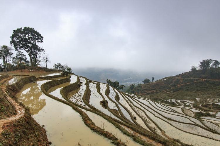 View of rice terraces in sapa, vietnam