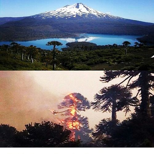 No nos olvidemos del sur de nuestro país donde aún el incendio en el Parque Nacional Conguillio no esta controlado.... Fuerzamelipeuco SurDeChile Parquenacionalconguillio Muertedenuestrospulmones gobiernodemierda chile novenaregion araucania