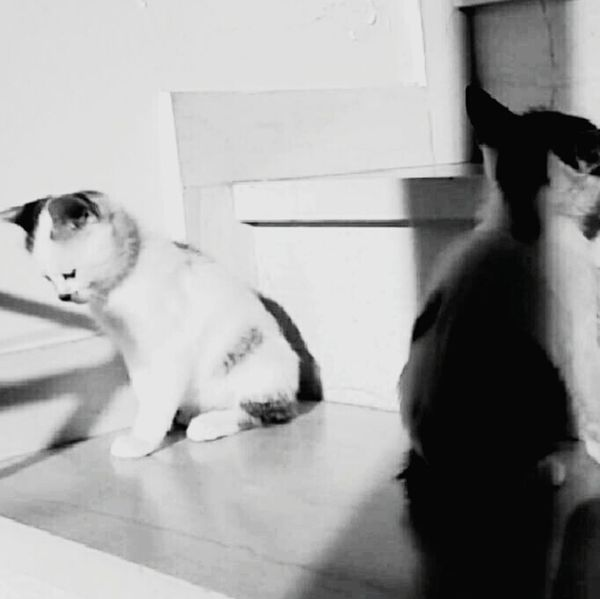 Cats Photooftheday PhonePhotography Photography Blackandwhite Blackandwhite Photography Cute Cute Cats Love Love Them ❤ EyeEm Best Shots First Eyeem Photo