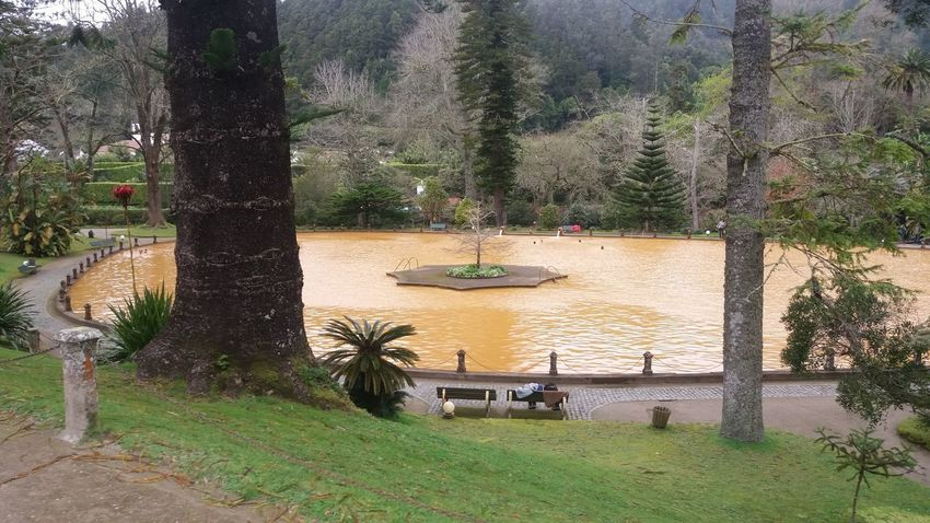 Nearby Furnas @ Azores (S. Miguel) Azores Azores Islands Azores Beauty Botanic Garden Excotic Furnas Furnas(Azoren) Architecture Azores, S. Miguel Beauty In Nature Botanic Day Garden Grass Green Color Growth High Angle View Nature No People Outdoors Tree Water