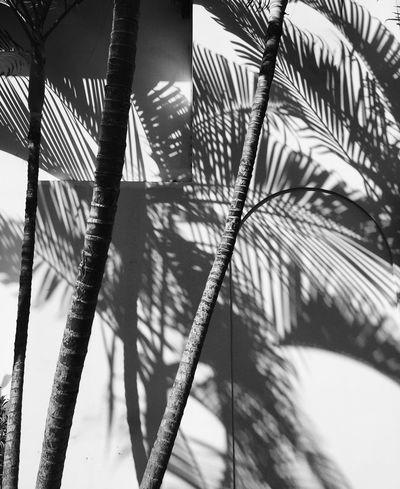 Costa Vibes Costarica Palm Trees Shadows Shadows & Lights Blackandwhite Blackandwhite Photography Traveling Travel Photography