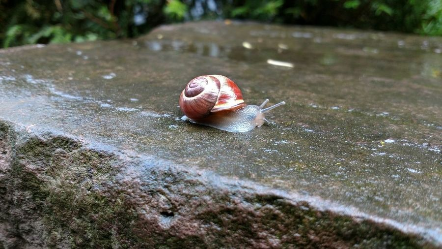 Niedliche Schnecke... One Animal Animal Themes Snail Nature Gastropod Animals In The Wild Day No People Outdoors Hermit Crab Close-up Animal Wildlife Beauty In Nature Slug улитка