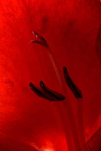 Close-up of insect on red flower