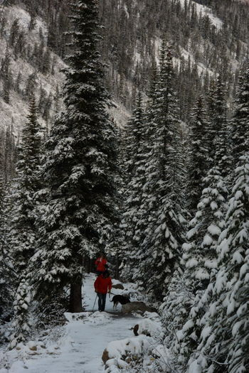 Adventure Forest Hiking Long Distance Shot Outdoors Snow Tree Winter