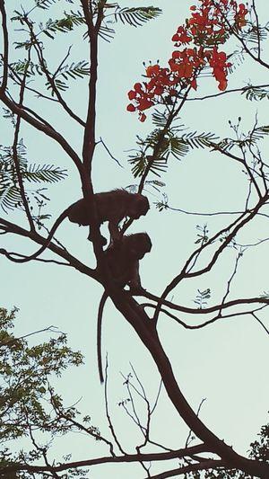 Tree Branch Bare Tree No People Animal Wildlife Nature Day Outdoors Sky Mammal