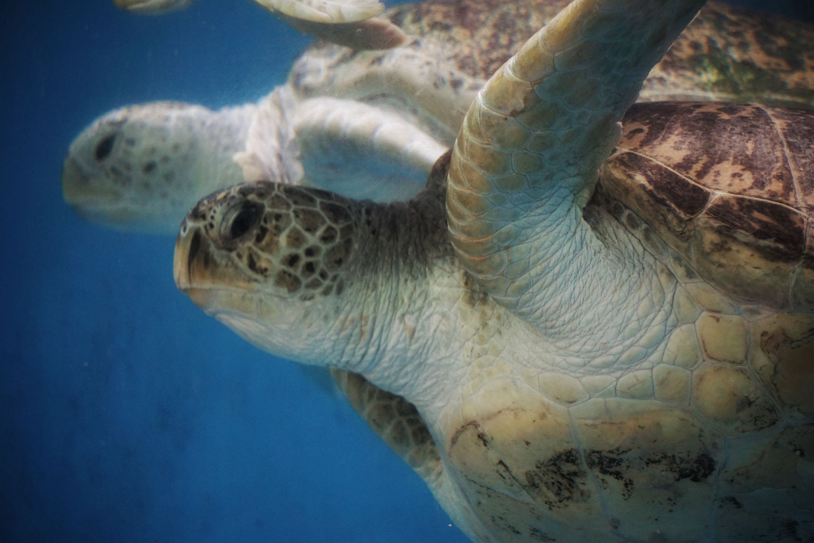 wildlife, close-up, sea life, nature, beauty in nature, natural pattern, no people, blue, outdoors, day, turtle, part of, animal body part, animal head, focus on foreground