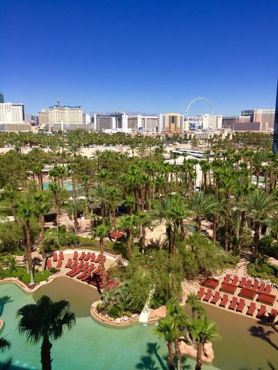 View by my room Las Vegas USA Nikon Nikonphotography Nikontop Nikonitalia Nikonusa Nikonphotographer Scattandoitalia Tree Blue Battle Of The Cities Clear Sky Road High Angle View Growth Day In Bloom Tourist Resort Blossom Outdoors City Life No People Garden Vacations