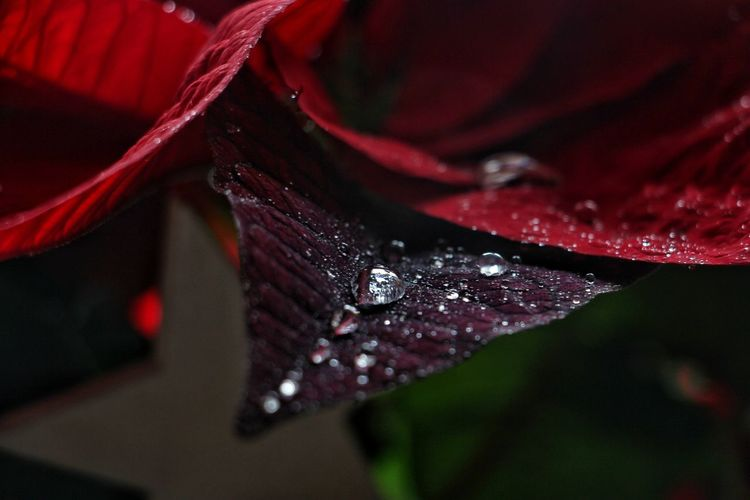 Nature Leaf Red Insect Close-up Plant Dew Leaf Vein Blade Of Grass RainDrop Plant Life Rainy Season Rain Water Drop Droplet Fall Drop Natural Pattern