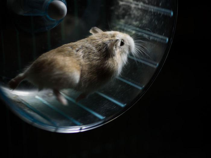 Close-up of hamster running in wheel