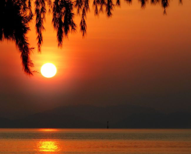 😶😶😶 Sunset Orange Color Sun Sea Reflection Water Beauty In Nature Silhouette Gold Colored Beauty No People Tranquility Beach Summer Sky Sunlight Scenics Tree Outdoors Nature
