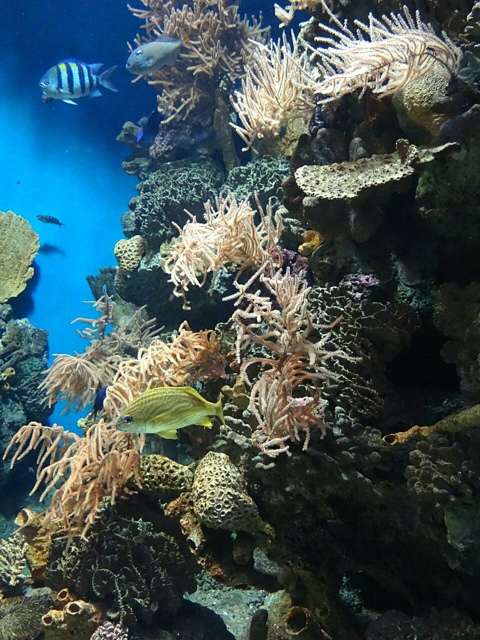 underwater, undersea, coral, sea life, nature, animals in the wild, sea, reef, water, animal themes, fish, no people, large group of animals, beauty in nature, swimming, animal wildlife, scuba diving, clown fish, day, outdoors
