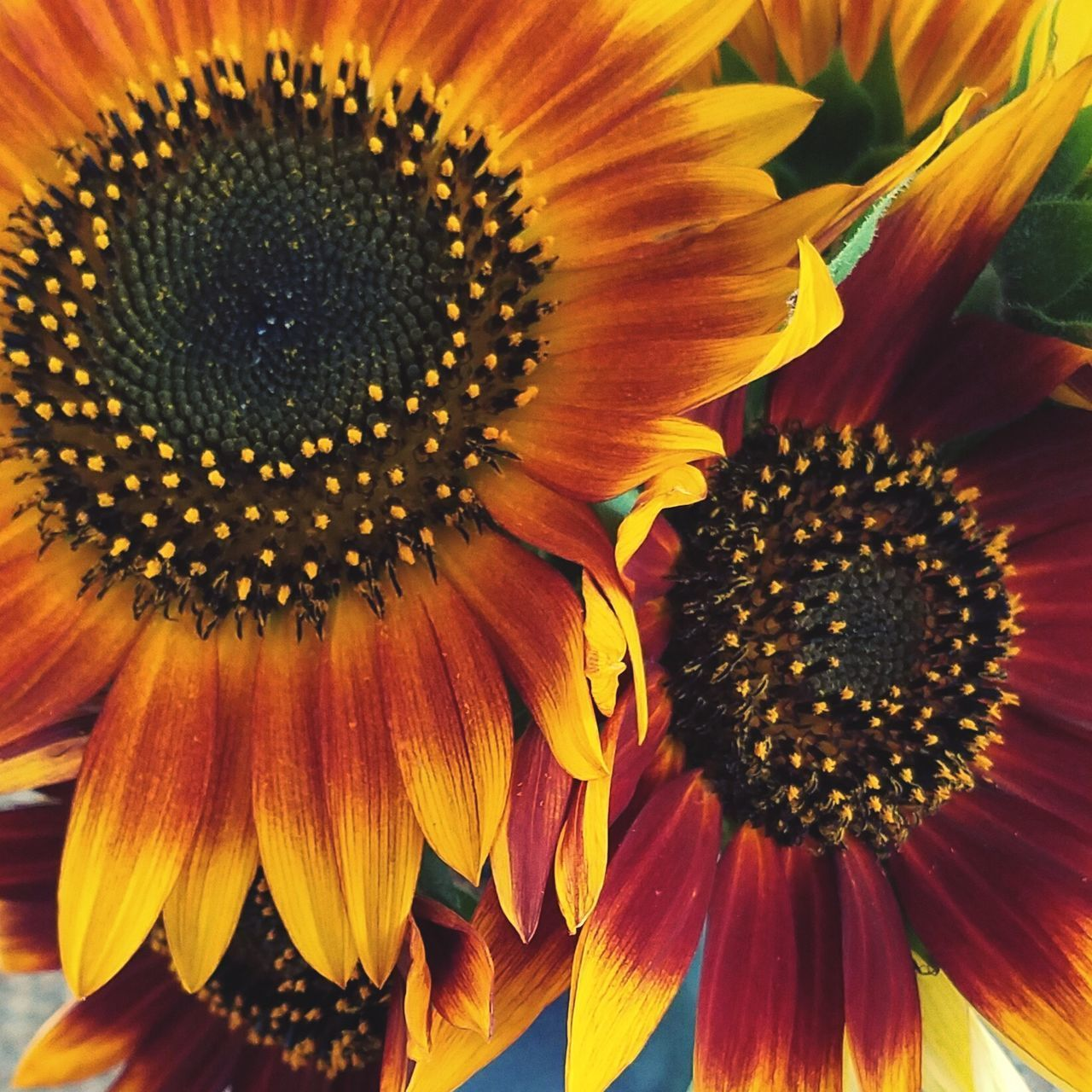flower, flowering plant, flower head, vulnerability, petal, fragility, freshness, pollen, inflorescence, plant, growth, beauty in nature, close-up, sunflower, yellow, nature, no people, daisy, day, softness, gazania