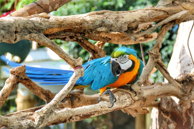Gökkuşağı Animal Wildlife Bird Animals In The Wild Animal Vertebrate Animal Themes Perching Branch Tree Parrot One Animal No People Macaw Plant Day Trunk Outdoors Focus On Foreground Nature Tree Trunk EyeEmNewHere EyeEmNewHere