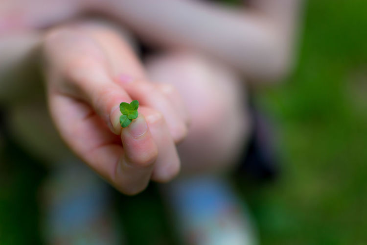 Cropped image of person holding leaves