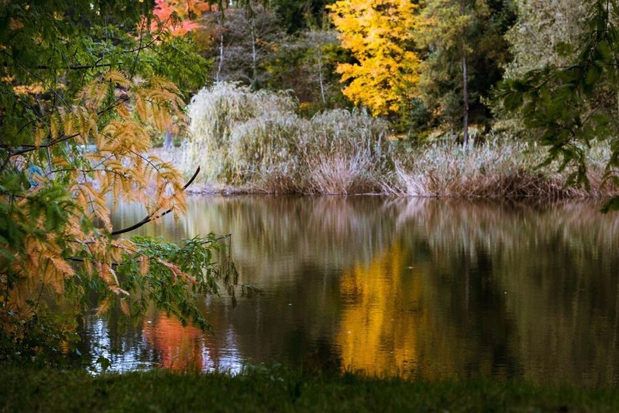 Lake Reflection Nature Water Tree Beauty In Nature Autumn Outdoors Scenics Tranquility Tranquil Scene No People Forest Day Leaf Grass Bird