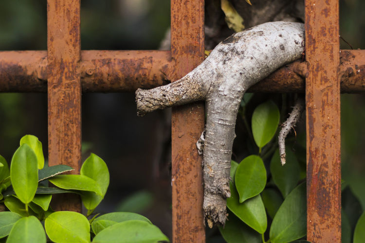 Barrier Boundary Close-up Day Fence Focus On Foreground Green Color Growth Leaf Metal Nature No People Old Outdoors Plant Plant Part Railing Rusty Selective Focus Wood - Material Wrought Iron