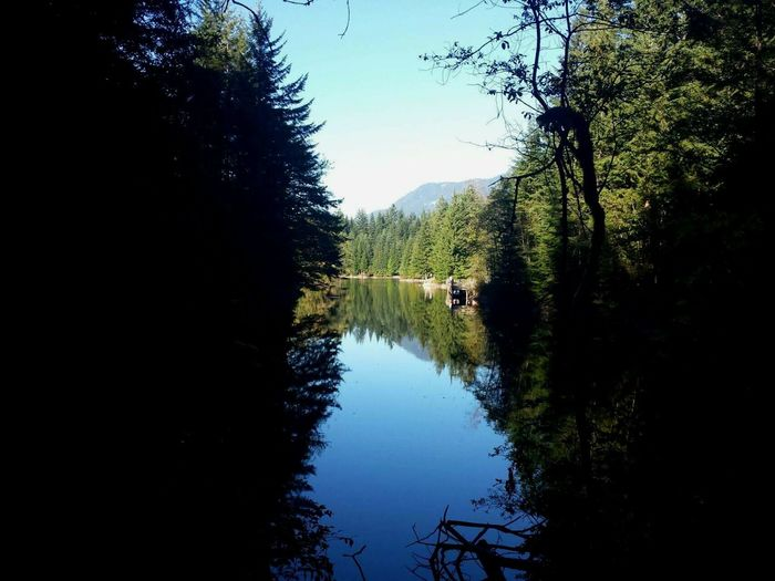 Reflection Tree Nature Water Lake Sky Tranquility Reflection Lake Outdoors Forest No People Looking Through Happy Place Summer Vibes British Columbia, Canada Sun Nature Scenics Alice Lake Clear Sky Beauty In Nature Day Peaceful From Darkness Into Light At Peace Sommergefühle