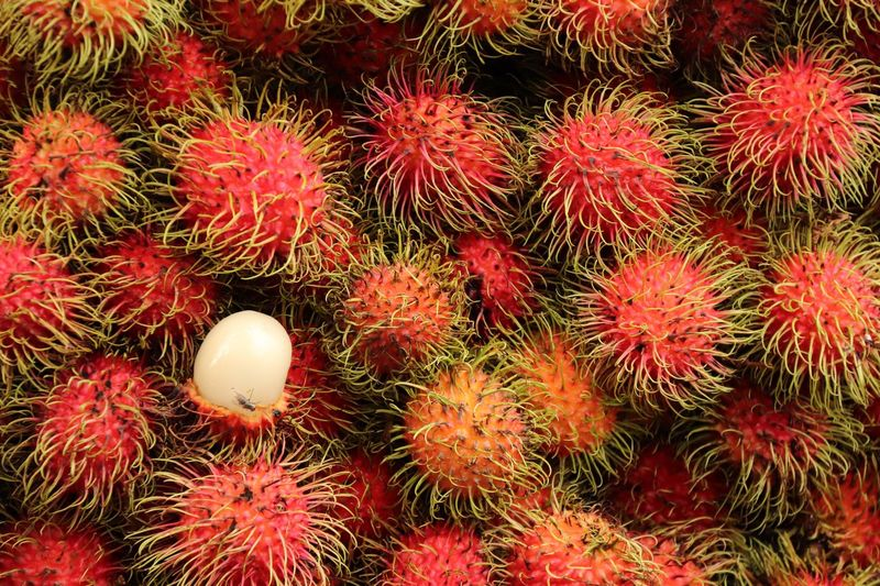 Red Freshness No People Food Backgrounds Close-up Food And Drink Nature Growth Beauty In Nature Fruit Healthy Eating