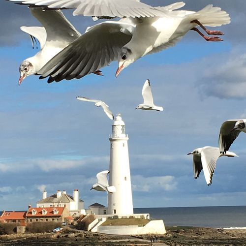 Seagulls , Giant , Seaside , St Marys Lighthouse , North East England , Birds Birds_collection Birds Of EyeEm  , EyeEm Nature Lover Smartphonephotography EyeEm Best Shots Eye Em Bird Lover IPhoneography I Phone Photography Iphone6s Eye4photography  EyeEm Gallery Eye Em Best Shots Nature Nature_collection Nature Photography The Great Outdoors With Adobe The Great Outdoors - 2016 EyeEm Awards