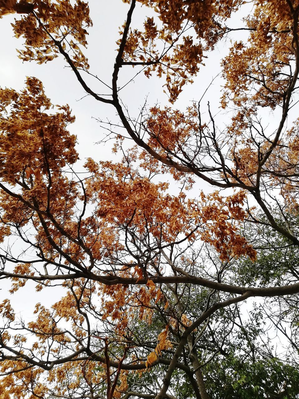 LOW ANGLE VIEW OF FLOWERING TREE AGAINST SKY DURING AUTUMN