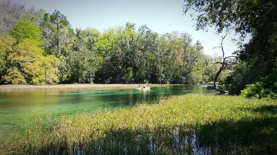 Tree Water Reflection Green Color Growth Lake Nature Outdoors No People Sky Day Scenics Beauty In Nature Rainbow Springs State Park Wild Swimming Travel Destinations River Rainbow River Vacation Florida Paddlers Kayakers Canoe