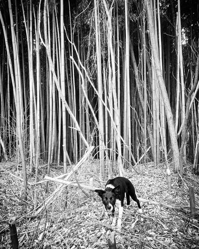 Animal Themes Mammal One Animal No People Domestic Animals Dog Pets Outdoors Day Nature Bordercolliesmooth Animal Wildlife Bordercolliesofinstagram Proudbordercollies Plant Bamboo Trees Looking At Camera Border Collie Beauty In Nature