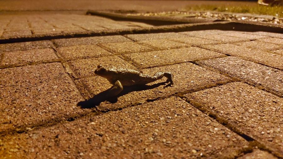 High angle view of lizard on footpath