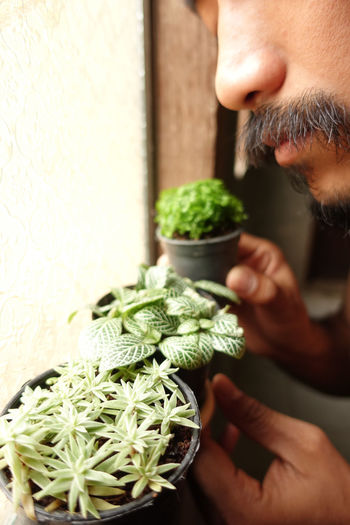 Plant Tree Facial Hair Freshness Green Herb Holding Indoors  Mastache Men One Person Window