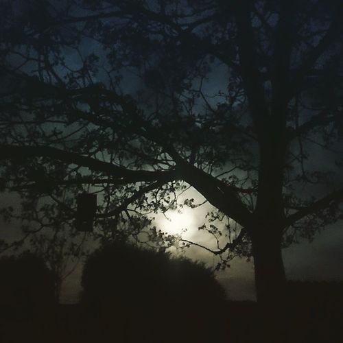 Moontree Fullmoon Nightshot Night Nightfoto Dark Creepy Cominghomeafterwork Nightshift Tree Dessel
