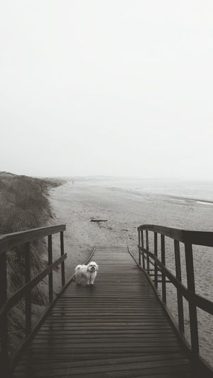 morning walk . Beach Nature Dog Walking