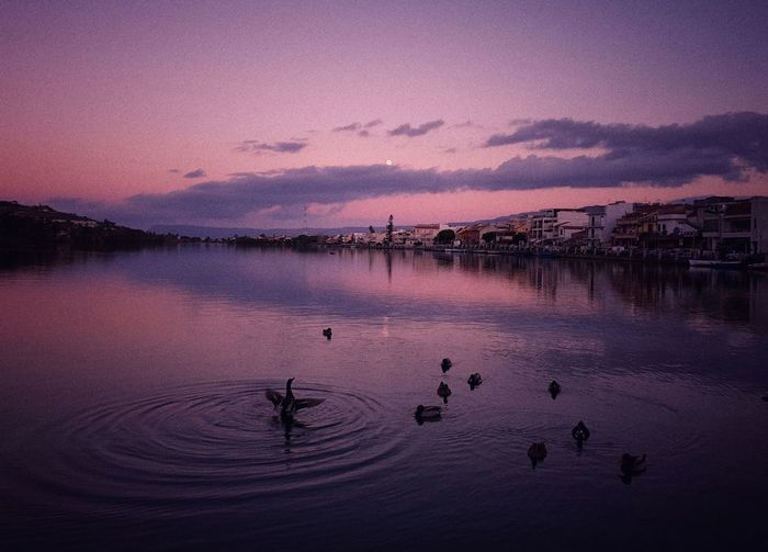 Birds swimming in lake against sky during sunset