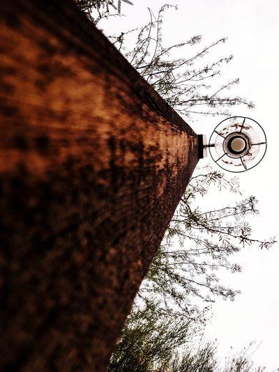Wooden Lampost Photooftheday Ways Of Seeing Splinter Arizona Lampost Light Wood Natural Tree Branches EyeEm Selects The Architect - 2018 EyeEm Awards Pixelated Technology Close-up Rainy Season Wet Monsoon Rain EyeEmNewHere The Still Life Photographer - 2018 EyeEm Awards
