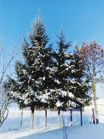 Snow ❄ Beautiful Winter Zima2016 Perfectpho Beautiful Nature First Eyeem Photo Wintertime Poland Polska Spruce Trees