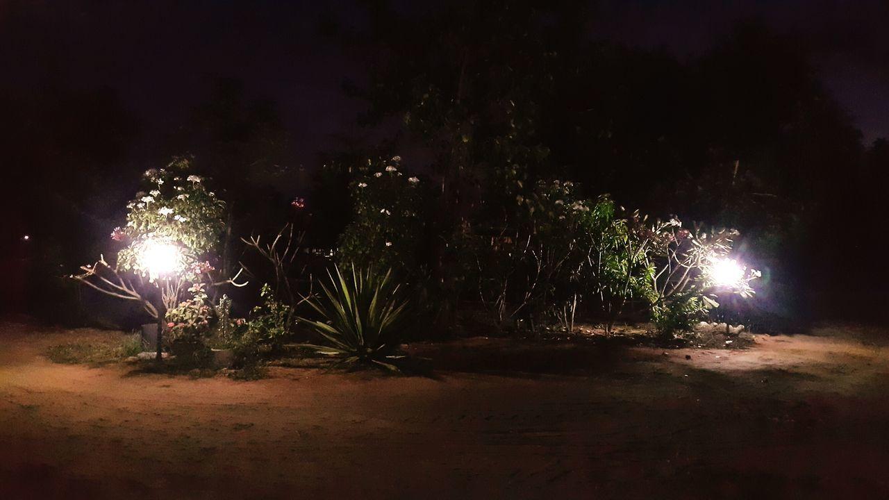 night, illuminated, glowing, outdoors, long exposure, firework - man made object, no people, firework display, celebration, tree, firework, nature, sky