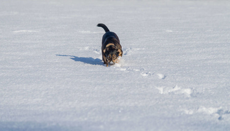 Spending time with my Dog Ruby is certanly among top 3 Things I Like to do. She enjoys Snow very much, unlike me. I preffer summer time! :)