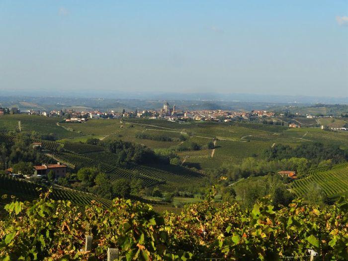 Scenic view of piedmont vineyard