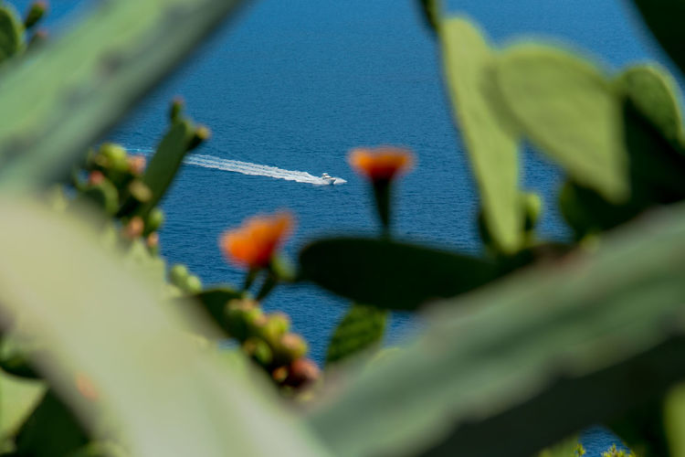 Cactus Cactus Flower Mediterranean  Summer Views Summertime Tranquility Transportation Beauty In Nature Blue Boat Close-up Flower Focus On Background Growth Leaf Nature Nautical Vessel No People Outdoors Plant Sea Seaside Selective Focus Summer Travel Destinations
