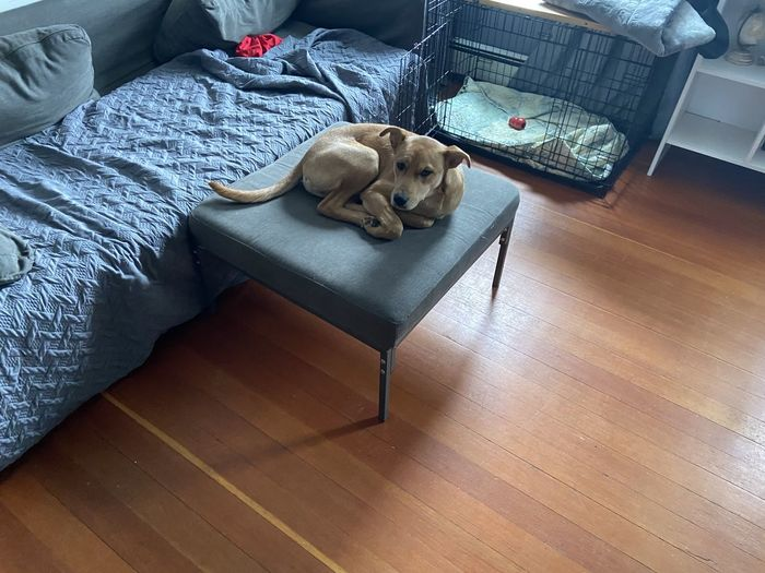 High angle view of dog relaxing on bed at home